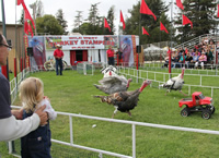 turkey races