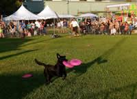 frisbee-dogs